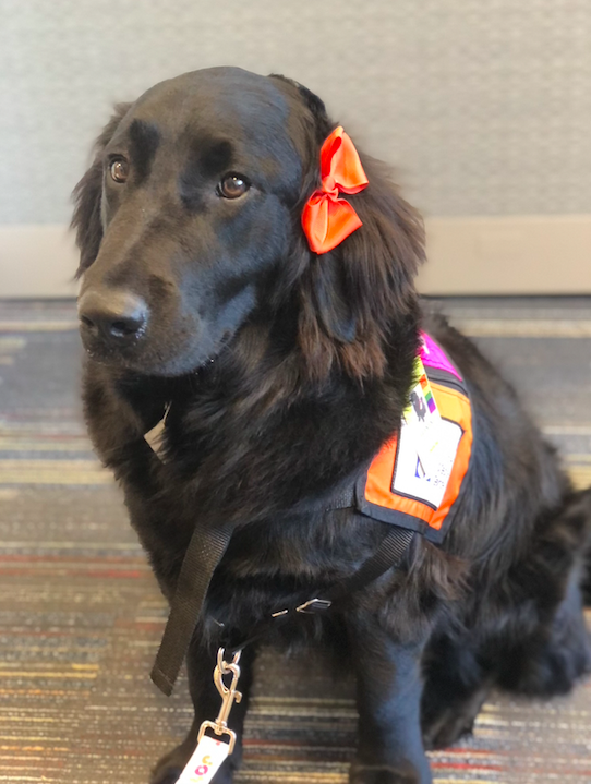 "A Special Valentine: Meet Valentina, The Newest ""Dogs for Joy"" Therapy Dog"
