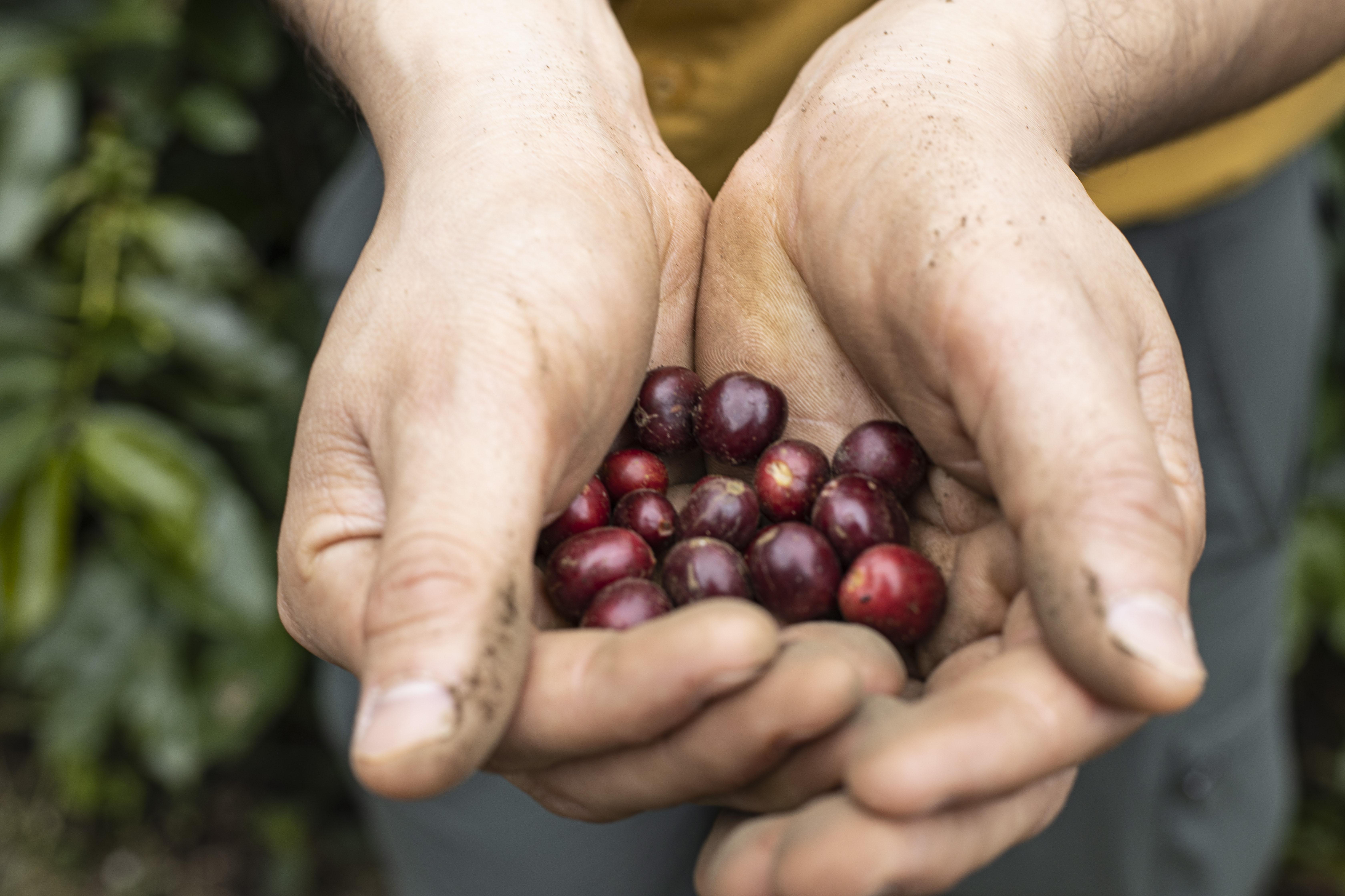 Coffee Sustainability 3