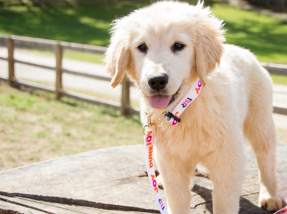 The Joy in Childhood Foundation Brings 11 In-residence Service Dogs to Pediatric Hospitals Nationwide