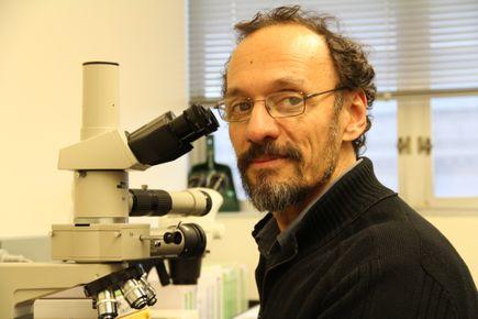 Claudio Mello, M.D., Ph.D. in the lab