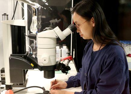 Lingyan Wang, Ph.D., in lab