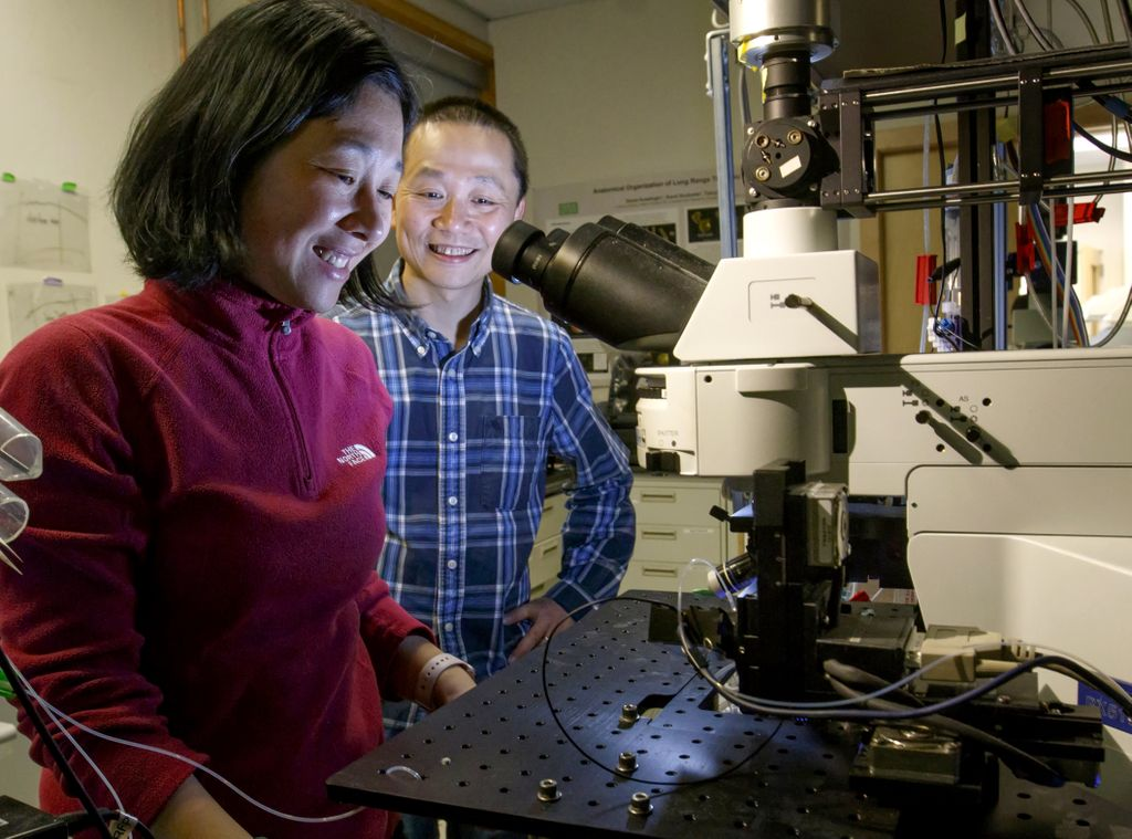 a female and male scientist, looking into a microscope