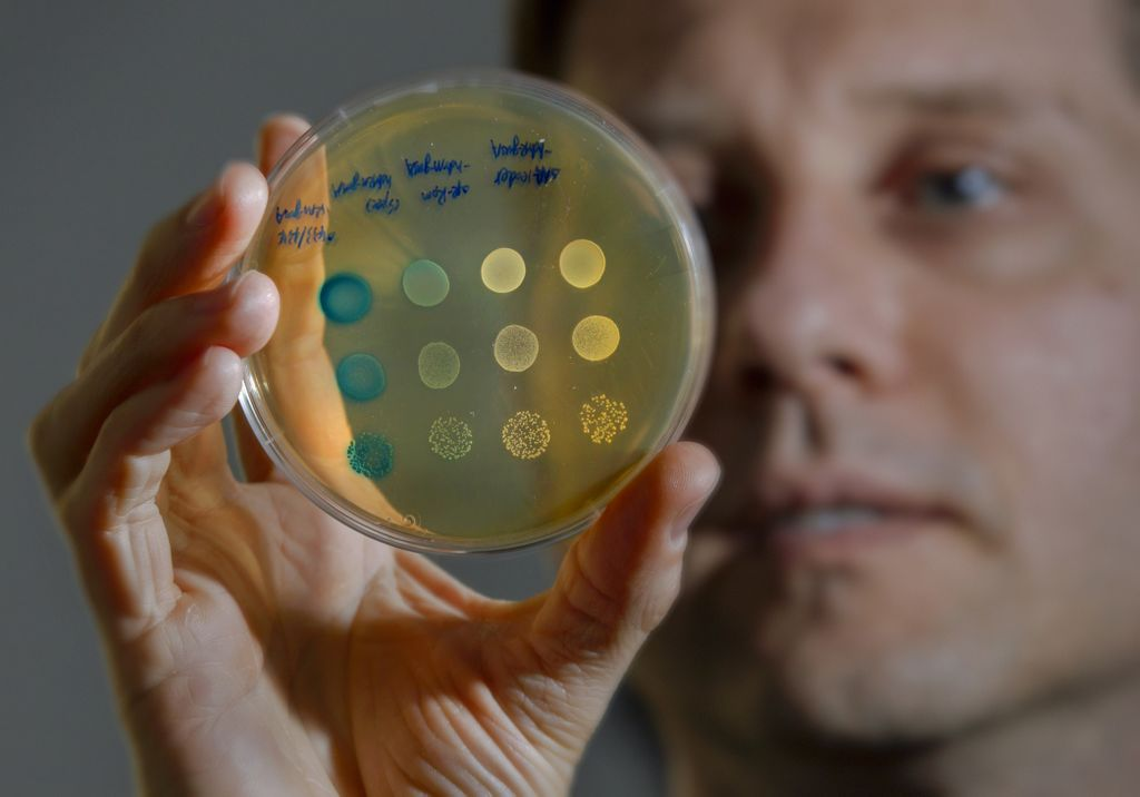 man holding up a petri dish filled with cultured bacteria