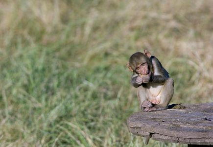 National Primate Research Centers launch educational resources about research with animals