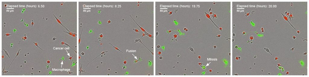 Cell fusion graphic