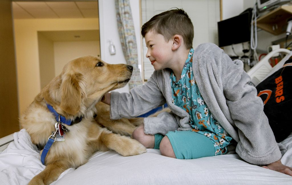golden retriever on the hospital bed with a young boy, who is petting the dog. they are looking one another in the face.