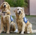 OHSU Doernbecher Children's Hospital therapy dogs
