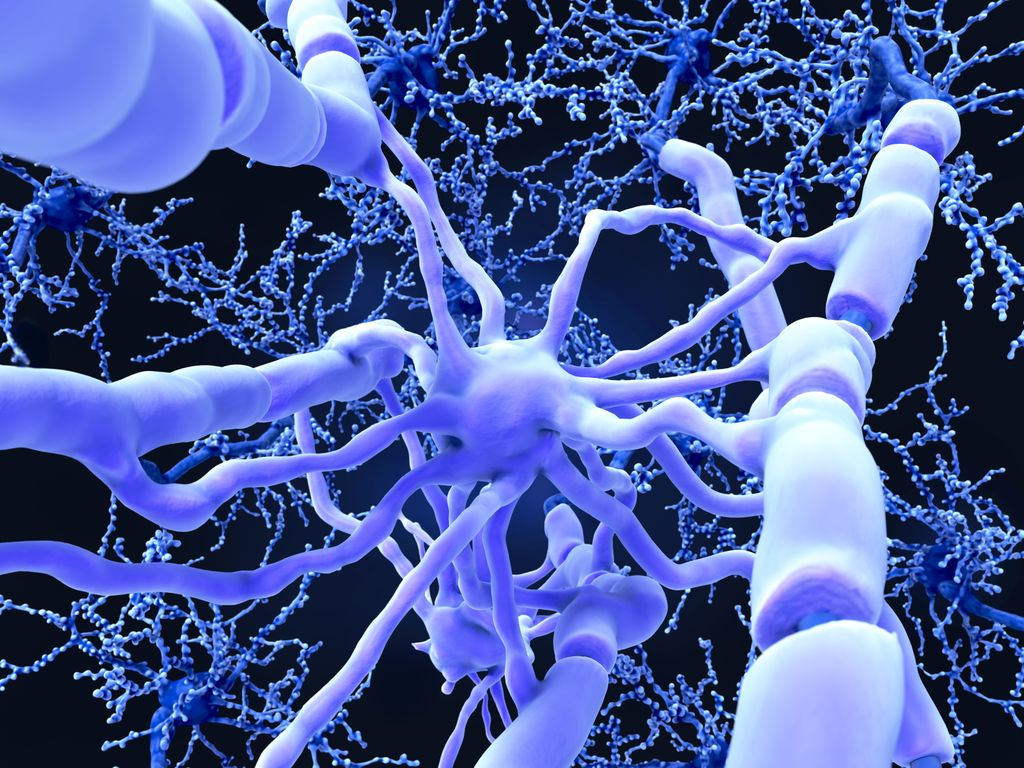 Breakthrough Study Reveals Biological >> Study Shows Promise In Repairing Damaged Myelin Ohsu News