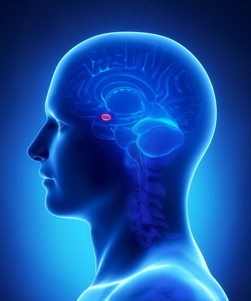 illustration of human head with amygdala