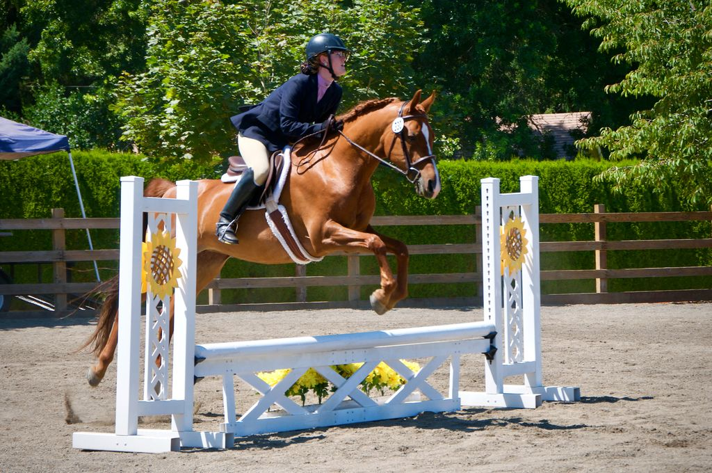 Kathryn Marxen-Simonson on her arabian horse and jumping over a fence obstacle in a sport jumping competition