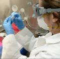 COVID-19 genome sequencing