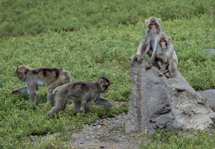 Research videos: study in monkeys shows diet during pregnancy affects child's brain development, behavior