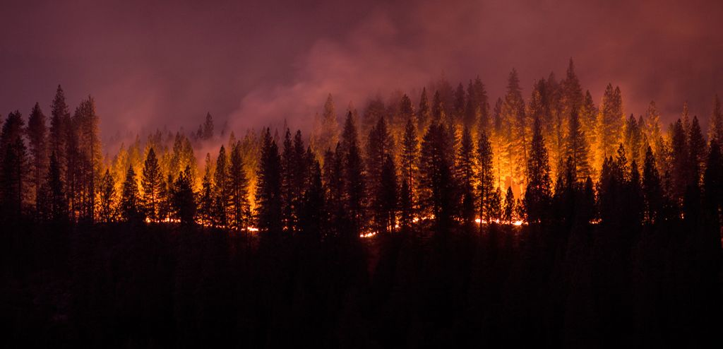 evergreen tree skyline of a forest on fire, with an orange glow and purple, smoky sky
