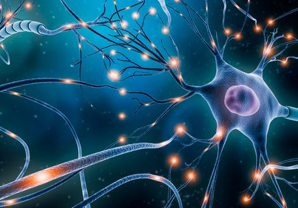 Study suggests compound protects myelin, nerve fibers