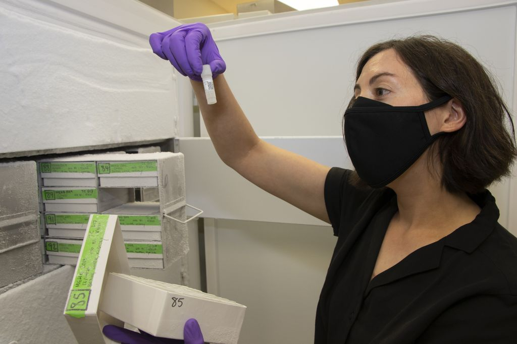 A woman with a short bob of dark hair wears face mask and safety gloves as she examines a vial in front of an open freezer.