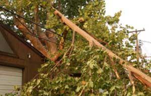 rectangular-pod-tree-damage