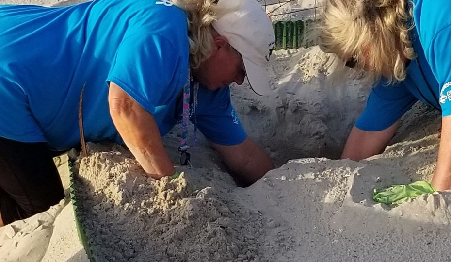 Helping out one turtle at a time