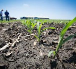 White Planters Shares Tips for Using Plant Emergence for Planter Evaluation