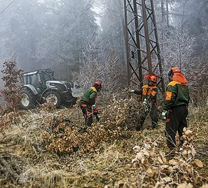 Valtras at work in Czech forest