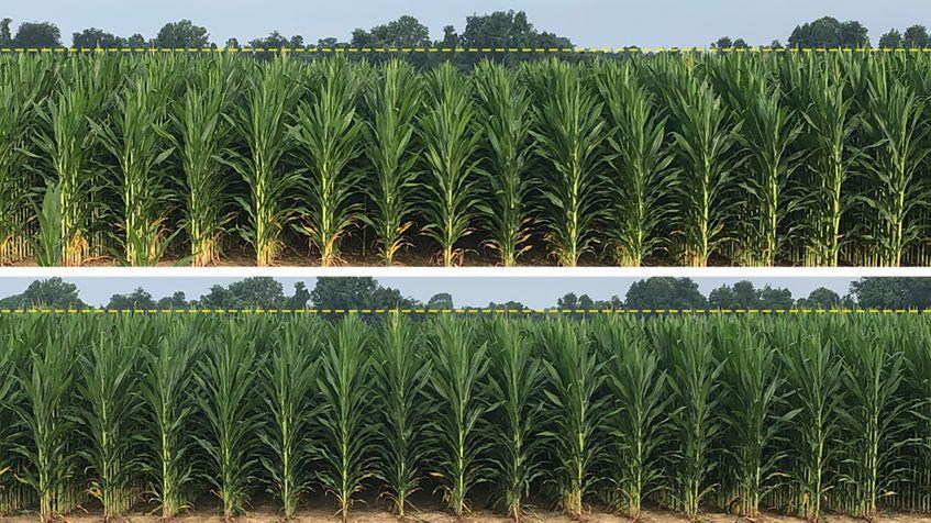 AGCO_NA_CT_No3_Corn_Row_Comparison_High_Res