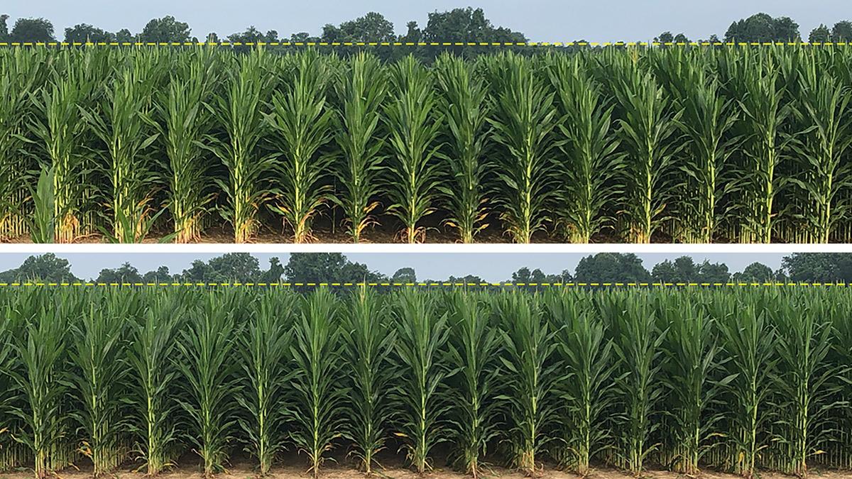 AGCO_NA_CT_No3_Corn_Row_Comparison_low_res