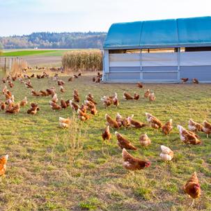 AGCOFoundation_chickens