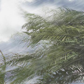 Windstorm (tropical storm, hurricane)