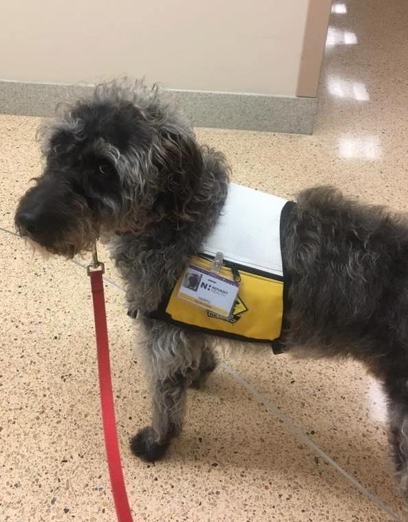 Harpo, volunteering at Brunswick Medical Center