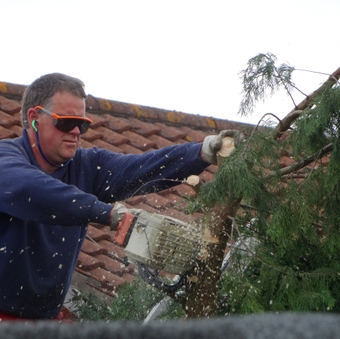 Image of tree-surgeon pruning tall Leylandii conifer hedge with chainsaw