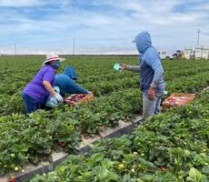 At-Risk Farmworkers Helped in Fight Against COVID-19 Through Grant From Blue Shield of California Foundation