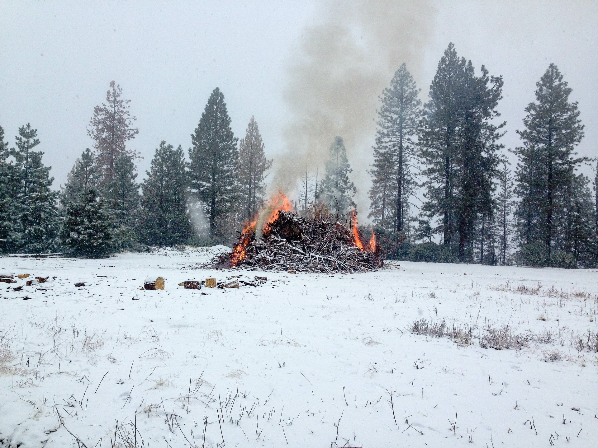 Piles of logs and debris are burned by SCE Forestry during the winter when conditions are safe.