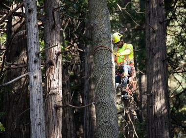 Hazard Tree Removal Helps Reduce Wildfire Risk