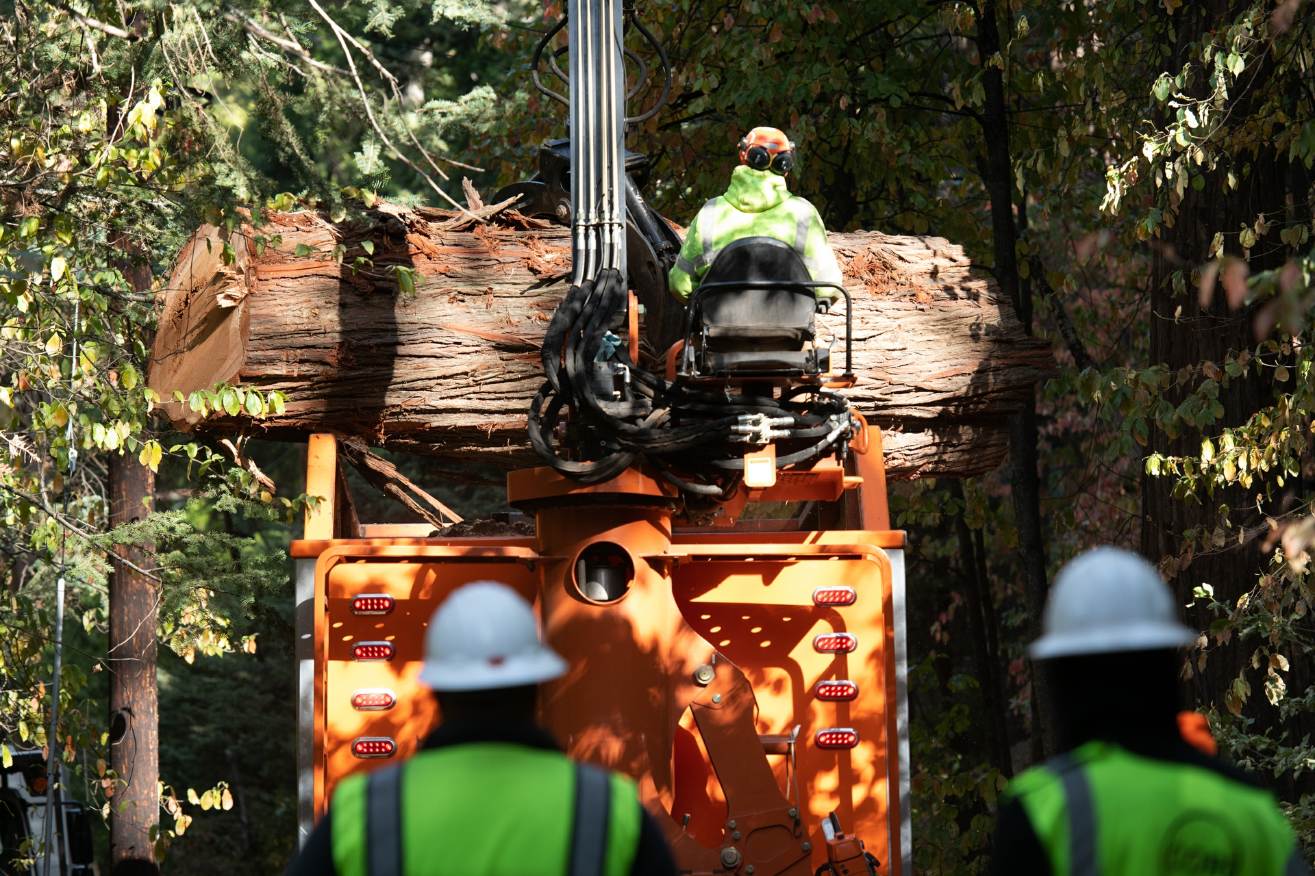 Crews haul away part of a tree that had to be removed because it posed a hazard to SCE power lines.