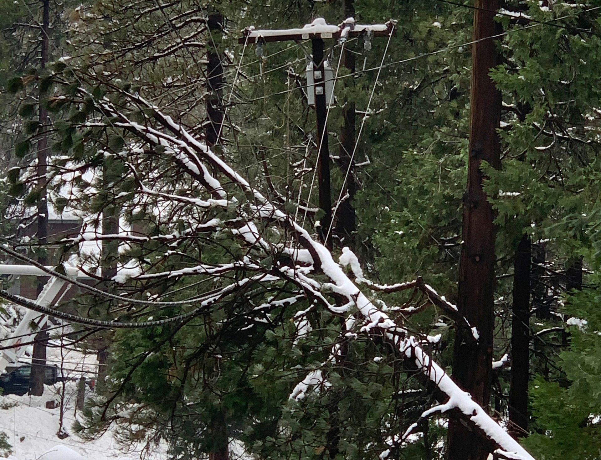 Snow-laden trees fell into power lines causing power outages throughout the Lake Arrowhead area after the Thanksgiving snowstorm.