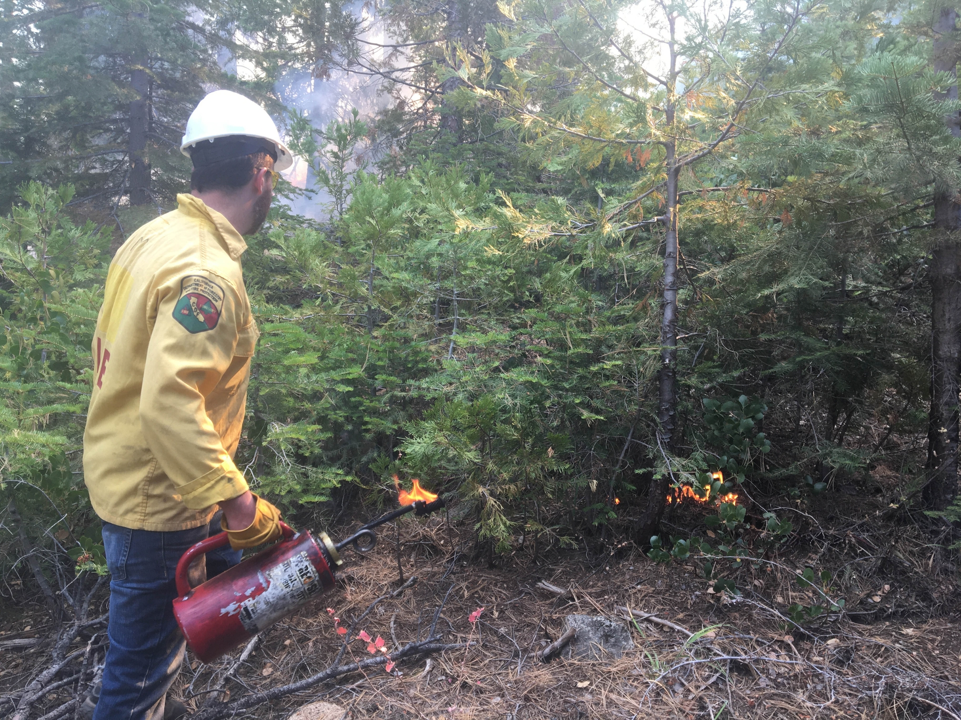 Bob Evans from the Natural Resource Conservation Service uses a drip torch to thin a thicket of trees with low intensity fire.