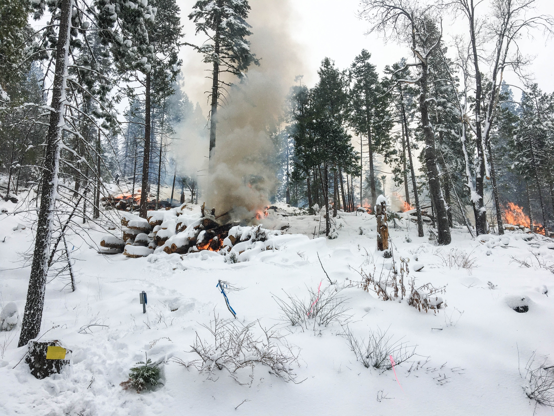 Snow in Shaver Lake provides the perfect conditions for SCE forestry staff to burn piles of trees that were cut to thin the forest.
