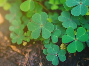 Infographic: Going Green for St. Patrick's Day