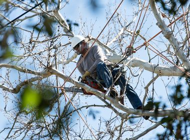 SCE Steps Up Tree Trimming in High Fire Risk Areas