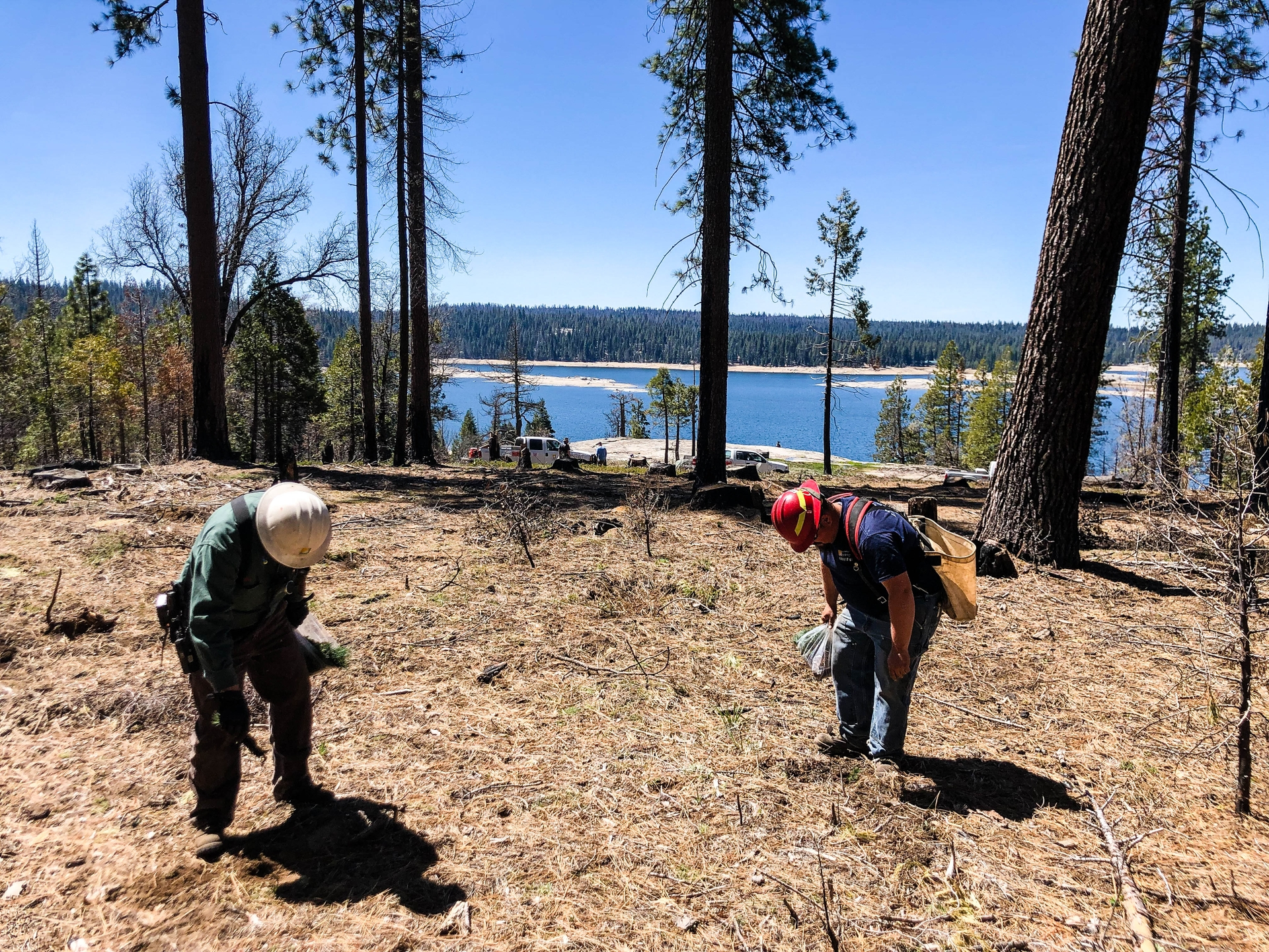 SCE forestry workers Lee Hooten and Nick Terrio plant Ponderosa pine seedlings north of Shaver Lake in a bark beetle-impacted stand