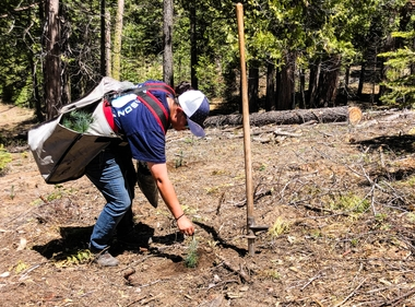 Wildfire Protection Begins With a Healthy Forest