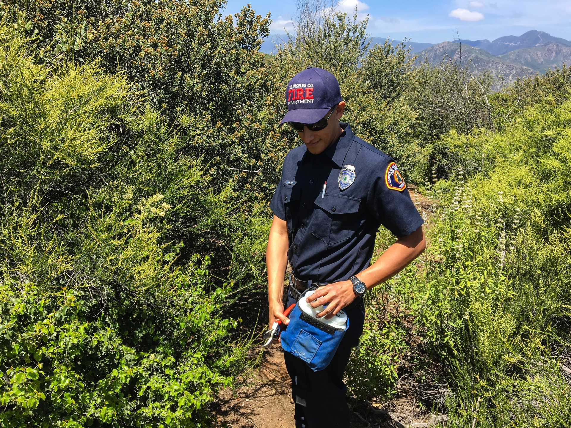 Dan Sanchez, LA County Fire Department's forestry technician, places new growth in a container.