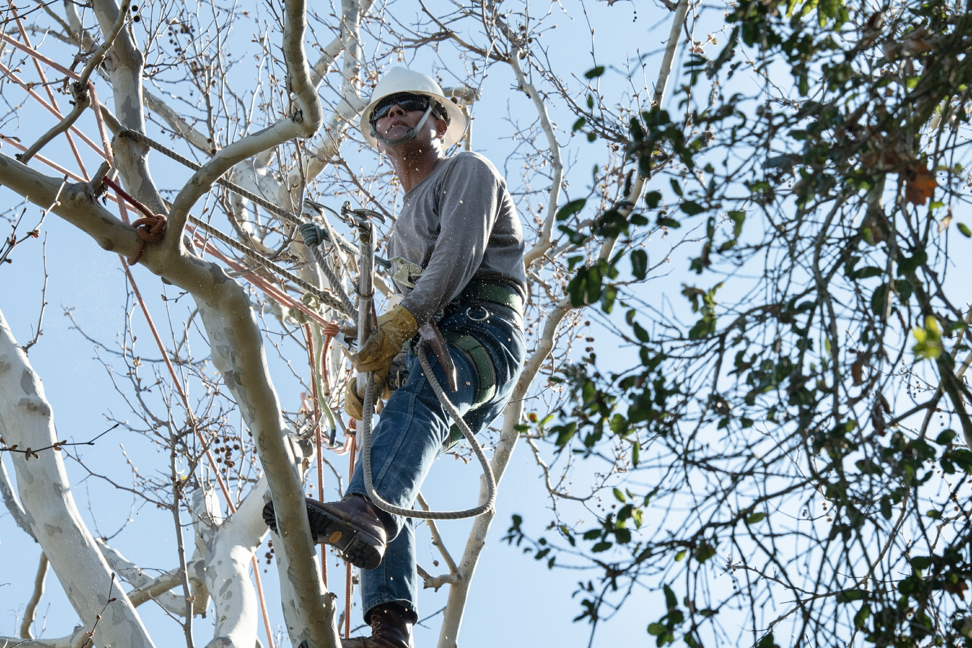 One of SCE's goals is to locate tree branches encroaching on power lines in fire-prone communities.