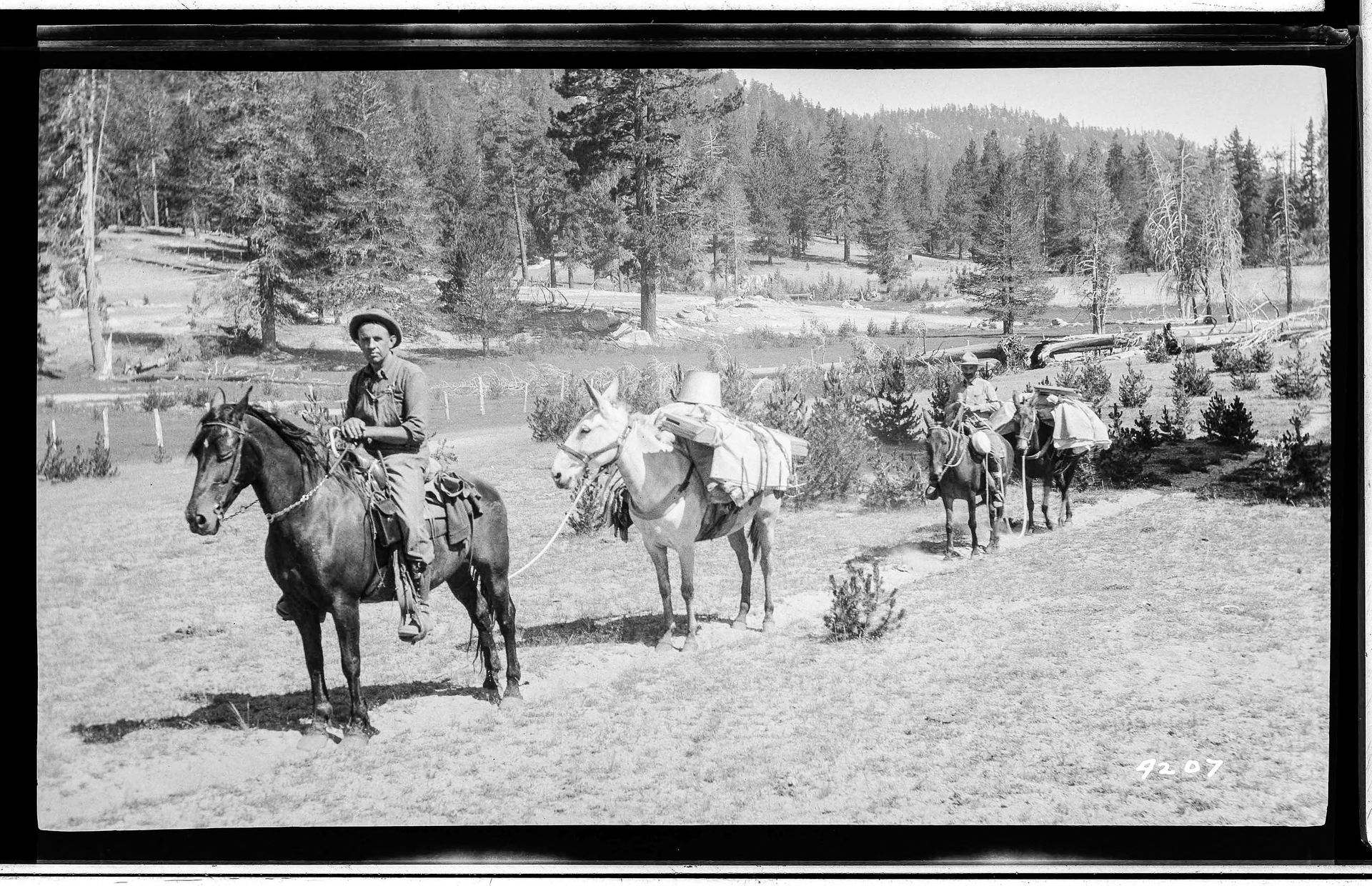 This historic photo shows Edison using horses and pack mules for a survey pack train in 1917.