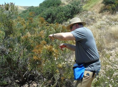 Plant Moisture Levels Help Predict Wildfires