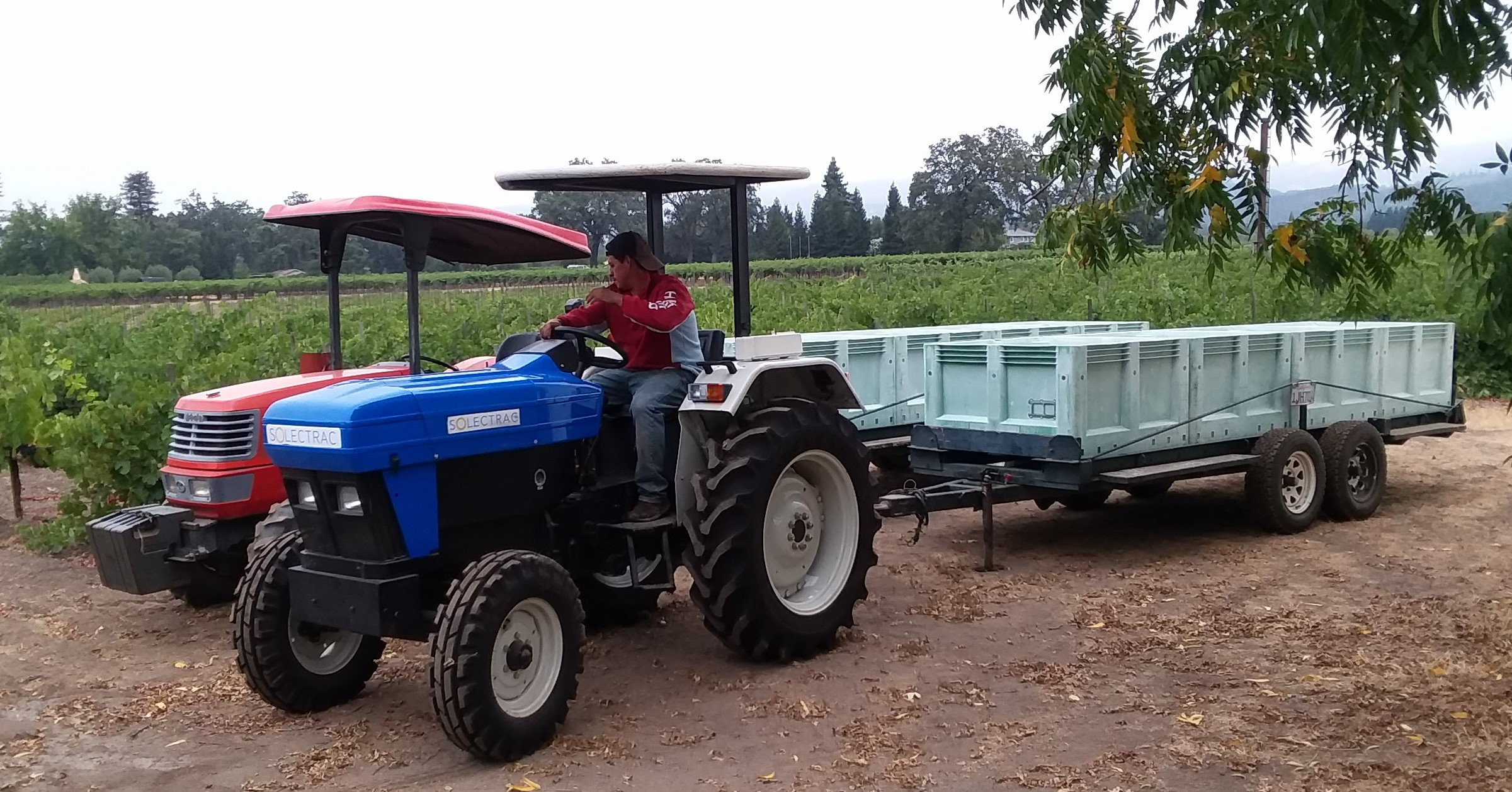 Harvesting grapes with an electric tractor on Frogs Leap Vineyard in Napa, California.