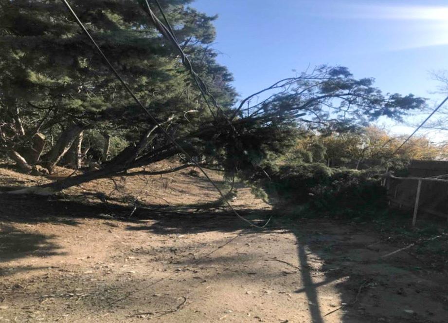 A fallen tree breaks a power pole during strong Santa Ana winds.