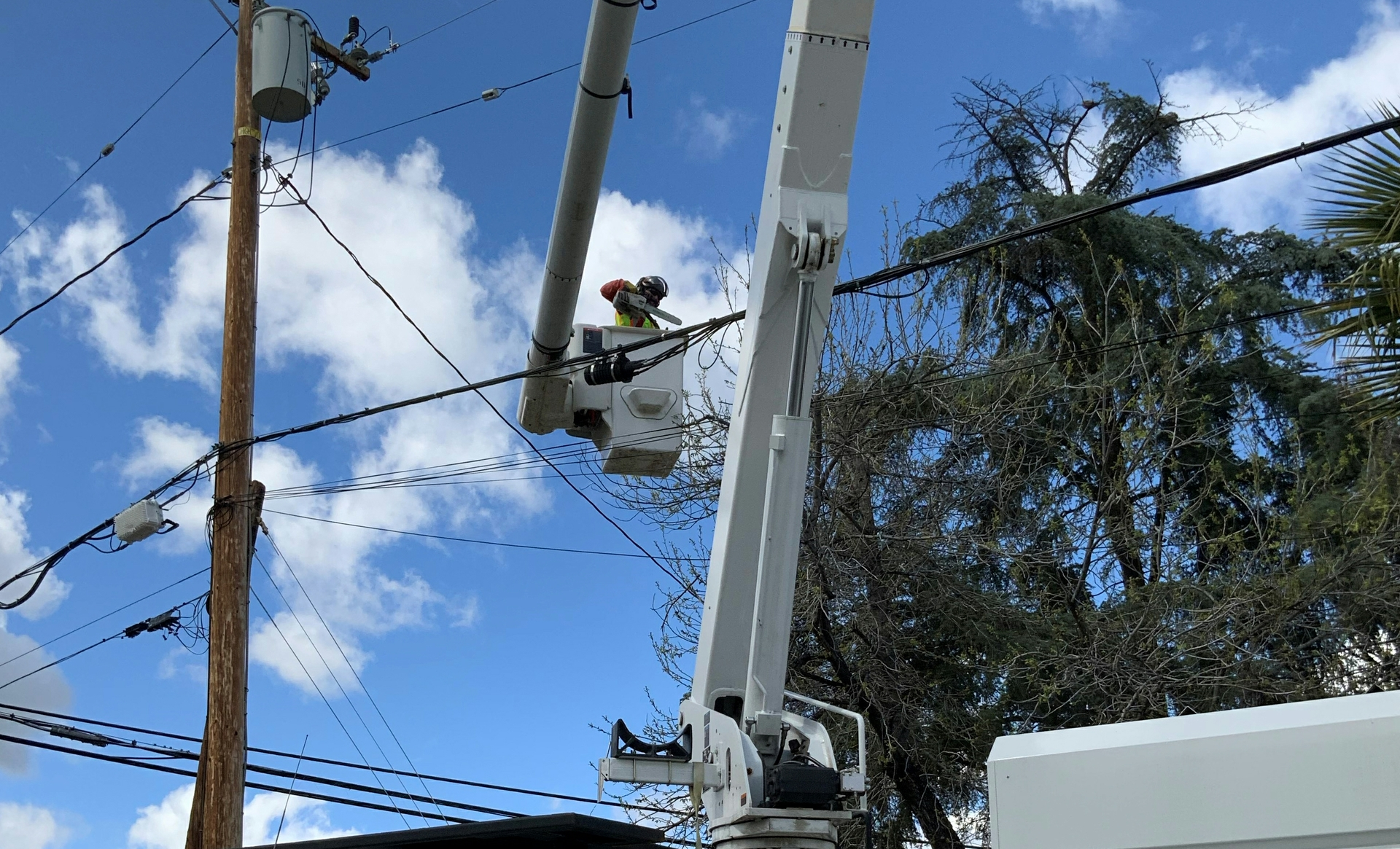 An SCE contract tree trimmer removes limbs that pose a threat to power lines.