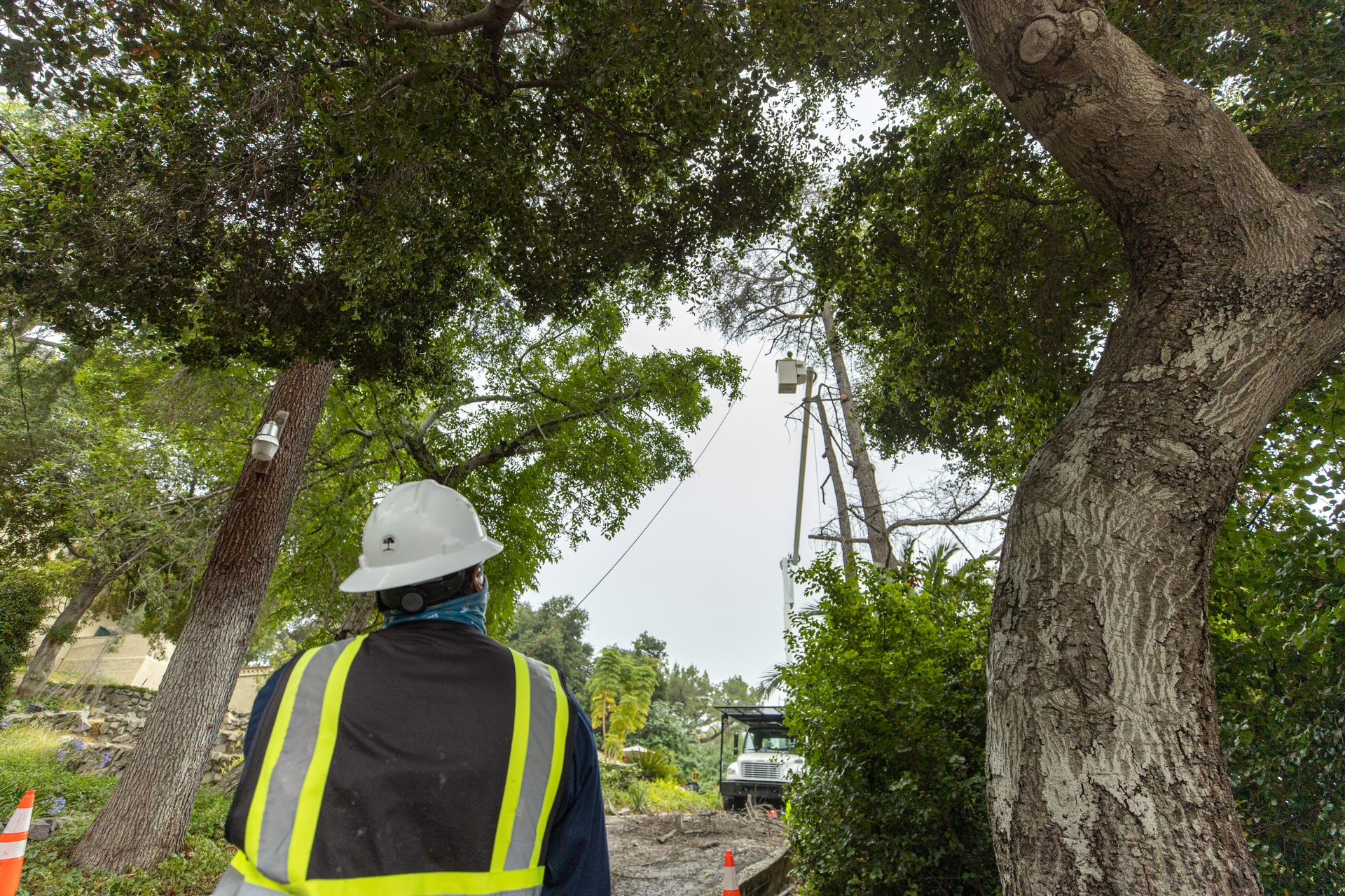An SCE contract crew examines dead trees.
