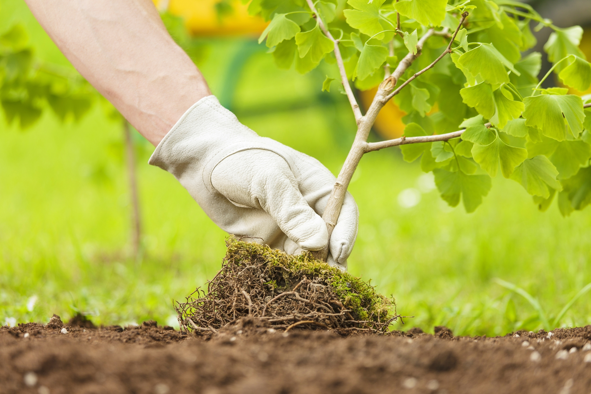Trees are chosen to succeed in specific locations based on their eventual size and water consumption, among other factors.