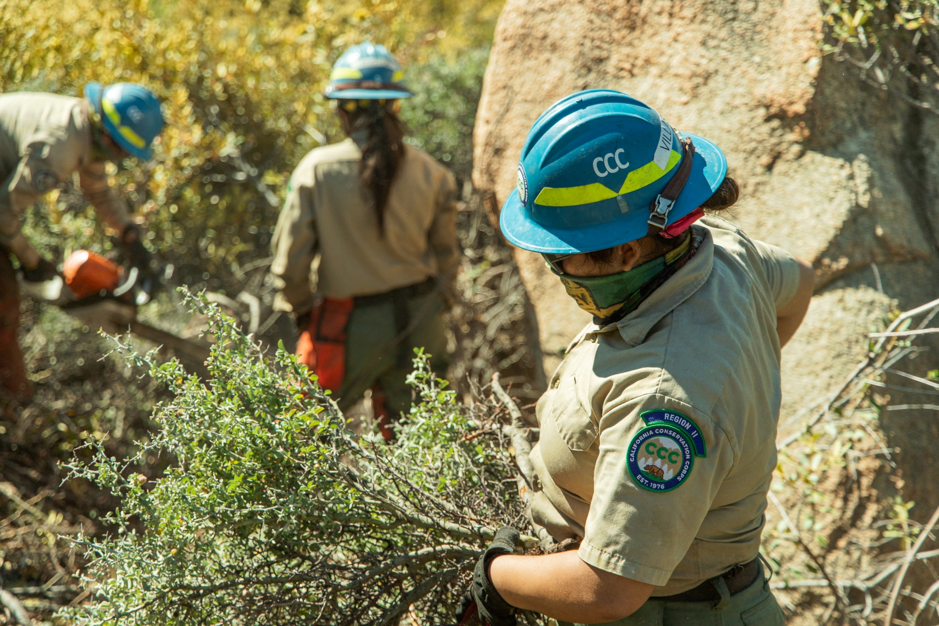 CCC Corpsmembers work to clear hazardous brush and trees near Big Bear.